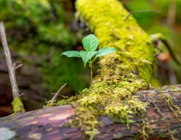 bluu 地球環境への取り組み